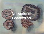 Networks of Connection